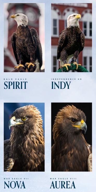 Eagles Spirit, Indy, Nova, Aurea