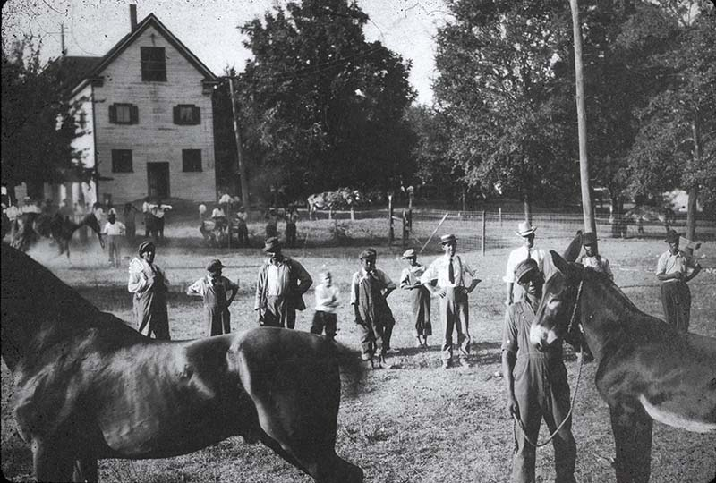 Students with horse and donkey